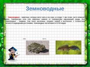 Земноводные Земноводные – животные, которые могут жить и на суше, и в воде. У