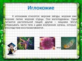 Иглокожие К иглокожим относятся: морские звёзды, морские ежи, морские лилии,