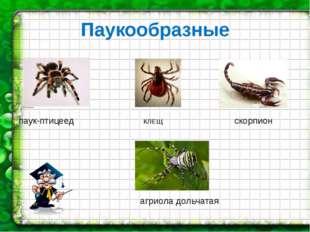 Паукообразные паук-птицеед КЛЕЩ скорпион агриола дольчатая