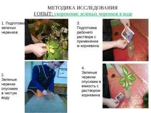 МЕТОДИКА ИССЛЕДОВАНИЯ I ОПЫТ: укоренение зеленых черенков в воде 1. Подготовк