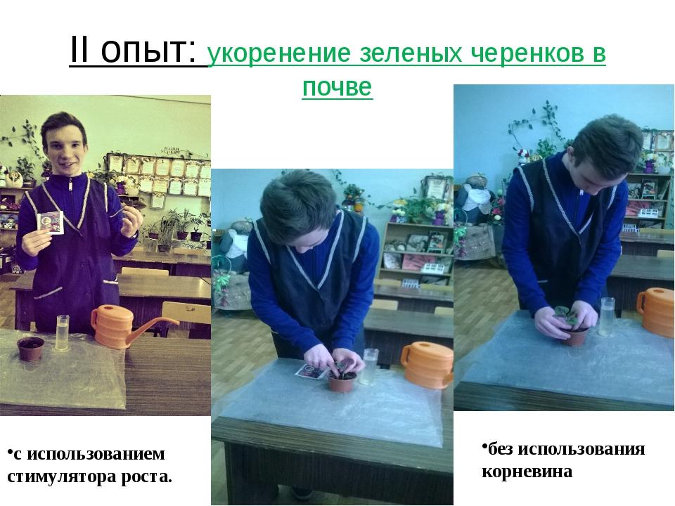II опыт: укоренение зеленых черенков в почве без использования корневина с ис...