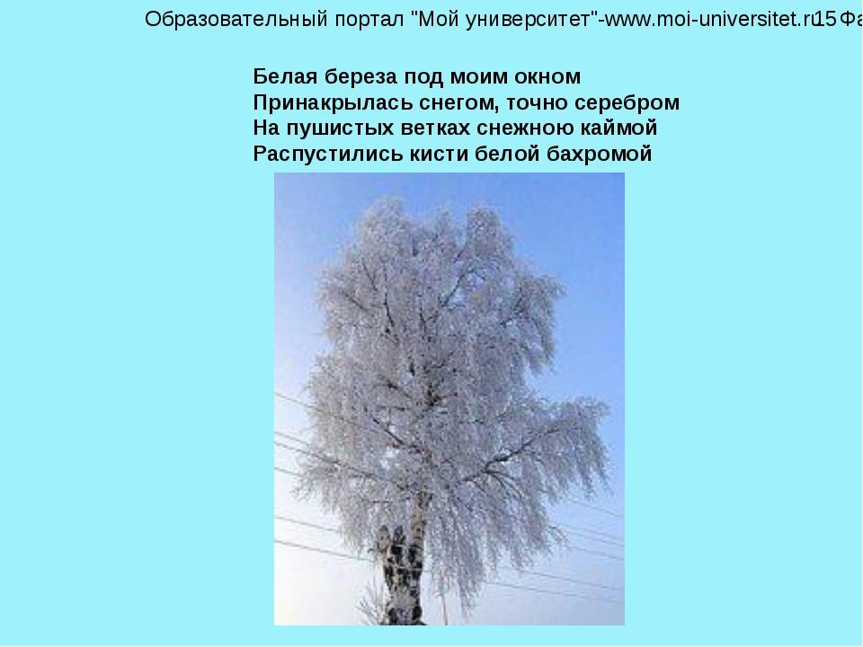Белая береза под моим окном Принакрылась снегом, точно серебром На пушистых в...