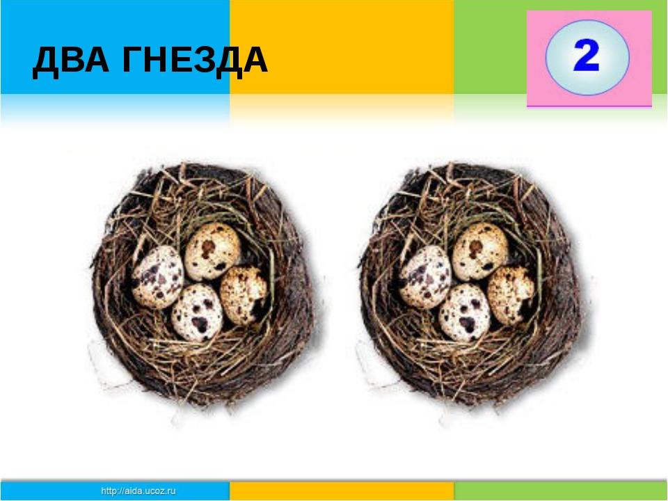ДВА ГНЕЗДА