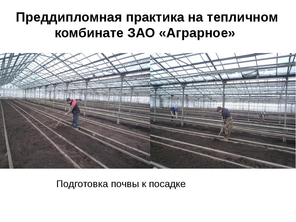 Преддипломная практика на тепличном комбинате ЗАО «Аграрное» Подготовка почвы...