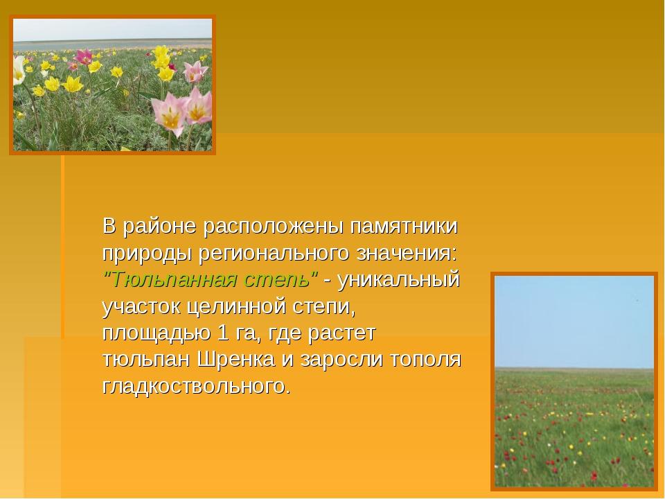 """В районе расположены памятники природы регионального значения: """"Тюльпанная с..."""