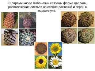 С парами чисел Фибоначчи связаны форма цветков, расположение листьев на стебл