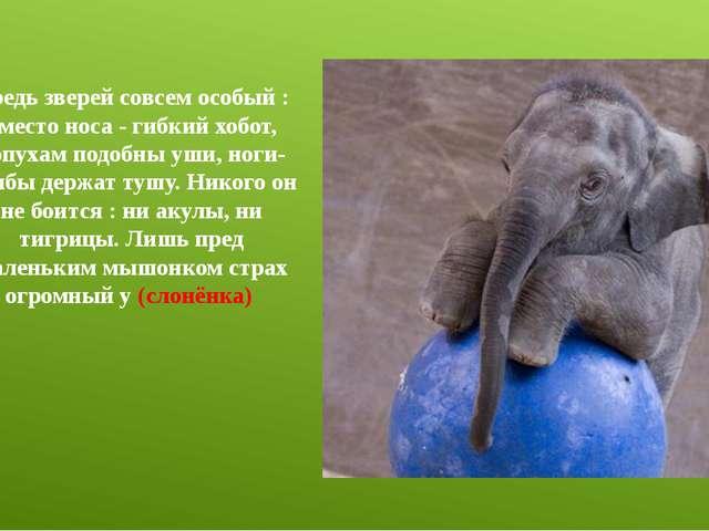 Средь зверей совсем особый : вместо носа - гибкий хобот, лопухам подобны уши,...