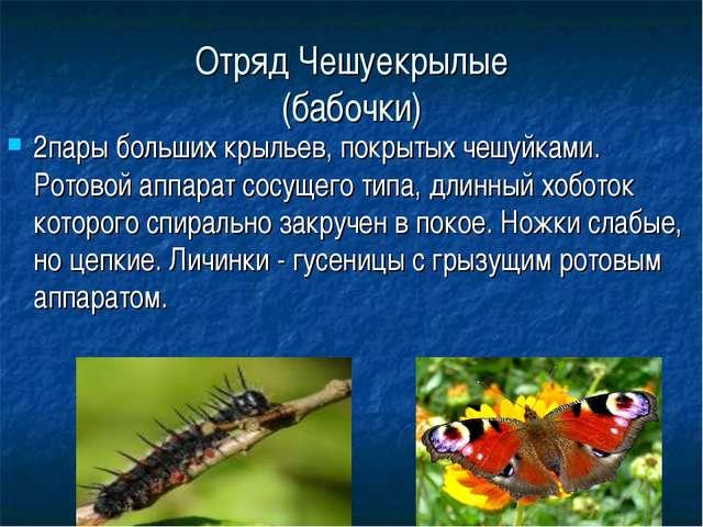 Отряд Чешуекрылые (бабочки) 2пары больших крыльев, покрытых чешуйками. Ротово...