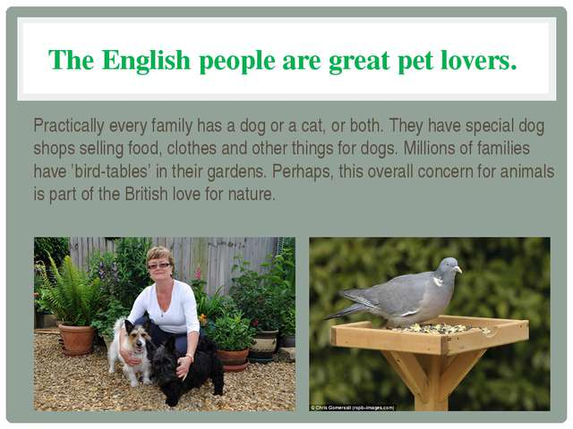 The English people are great pet lovers. Practically every family has a dog o...