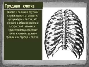 Форма и величина грудной клетки зависит от развития мускулатуры и легких, что