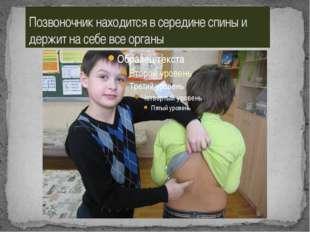 Позвоночник находится в середине спины и держит на себе все органы