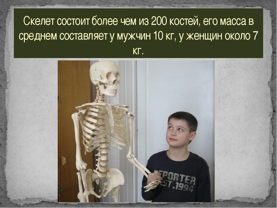 Скелет состоит более чем из 200 костей, его масса в среднем составляет у мужч...