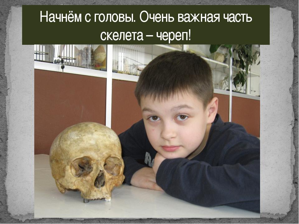 Начнём с головы. Очень важная часть скелета – череп!