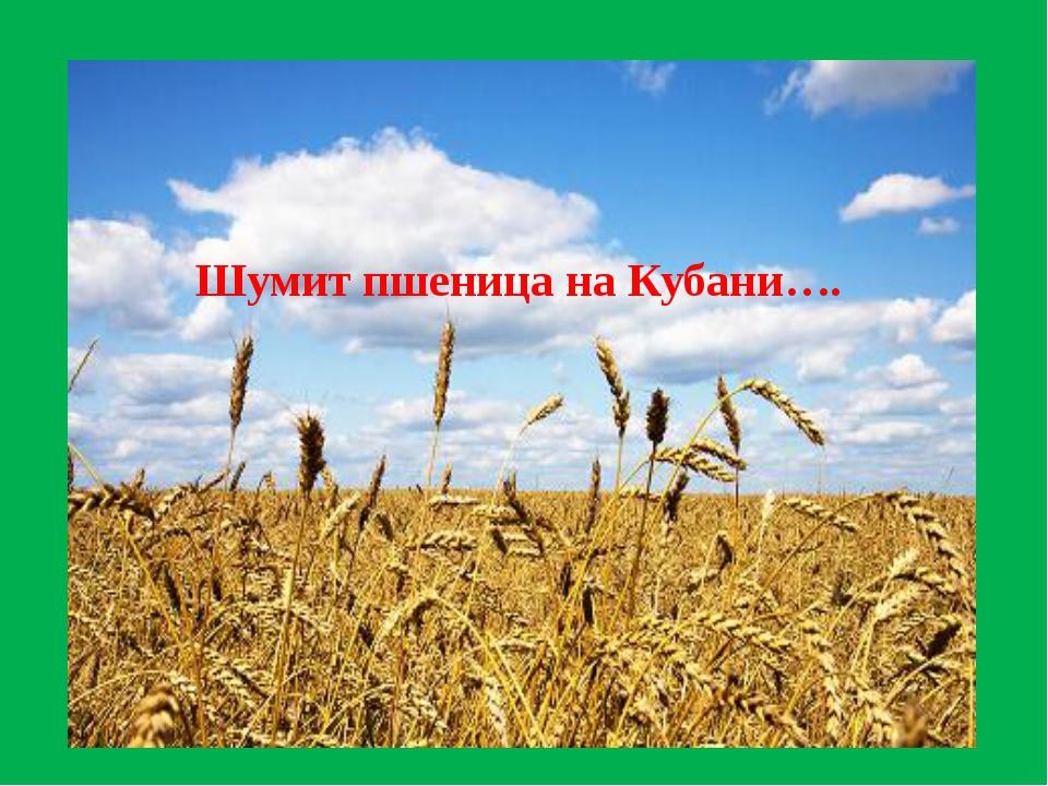 Шумит пшеница на Кубани….