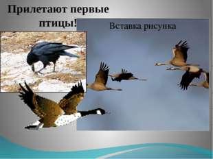 Прилетают первые птицы!