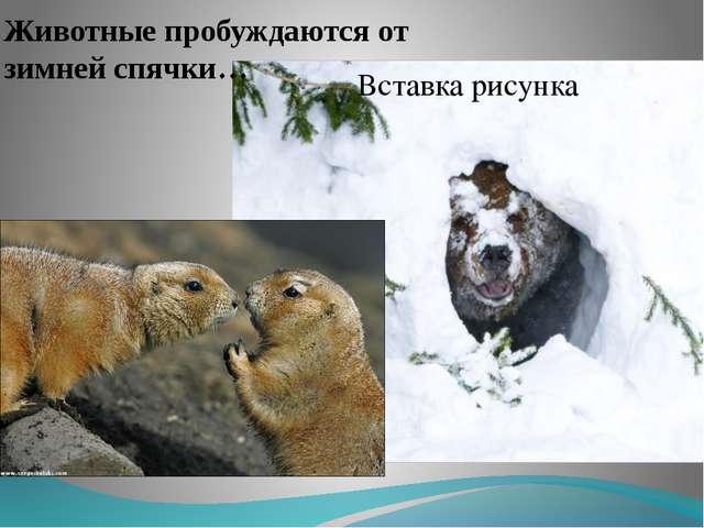 Животные пробуждаются от зимней спячки…