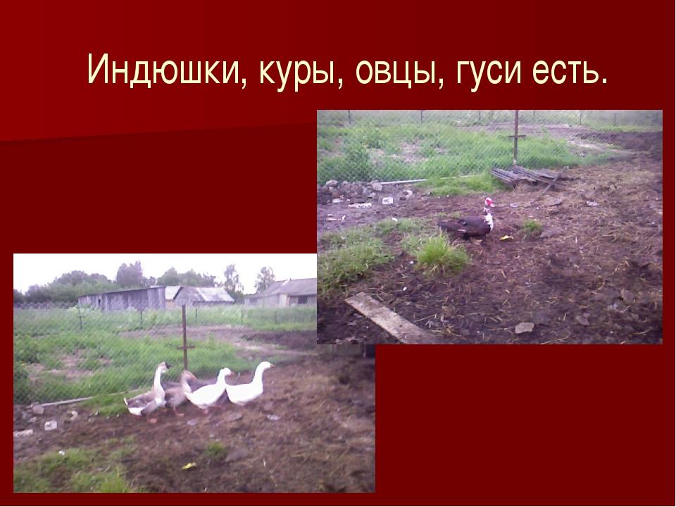 Индюшки, куры, овцы, гуси есть.