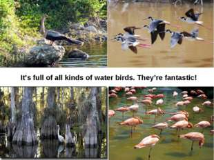 It's full of all kinds of water birds. They're fantastic!