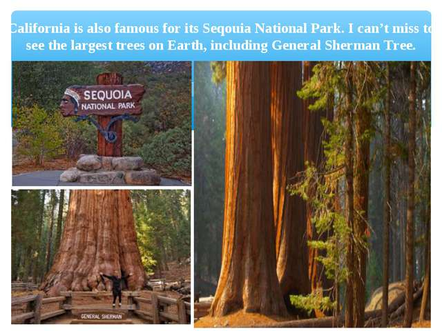 California is also famous for its Seqouia National Park. I can't miss to see...