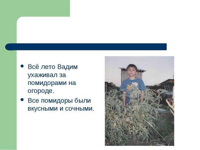 Всё лето Вадим ухаживал за помидорами на огороде. Все помидоры были вкусными...