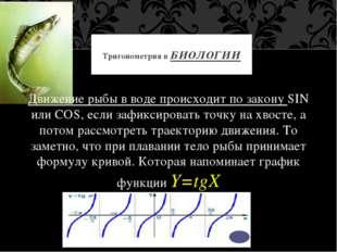 Движение рыбы в воде происходит по закону SIN или COS, если зафиксировать то
