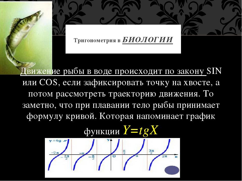Движение рыбы в воде происходит по закону SIN или COS, если зафиксировать то...
