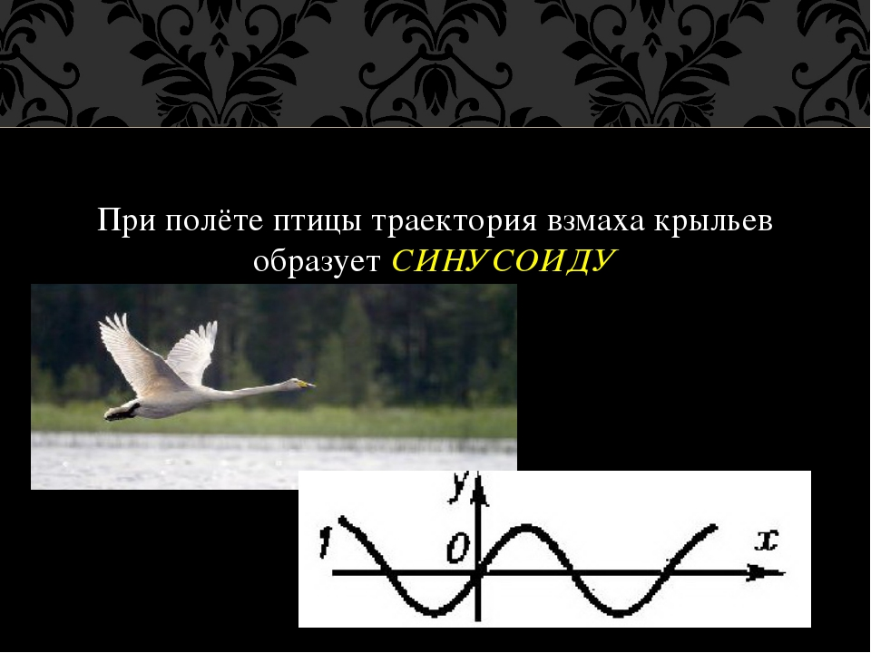 При полёте птицы траектория взмаха крыльев образует СИНУСОИДУ