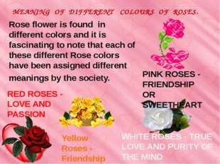 Rose flower is found in different colors and it is fascinating to note that e