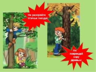 Не разоряйте птичьи гнезда! Не повреждай кору деревьев!