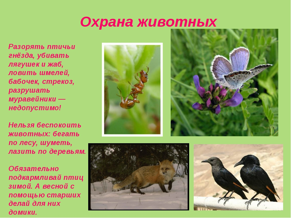 Охрана животных Разорять птичьи гнёзда, убивать лягушек и жаб, ловить шмелей...