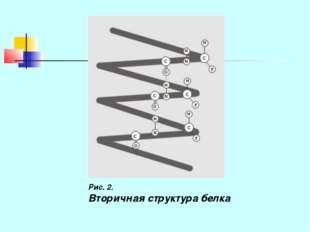 Рис. 2. Вторичная структура белка