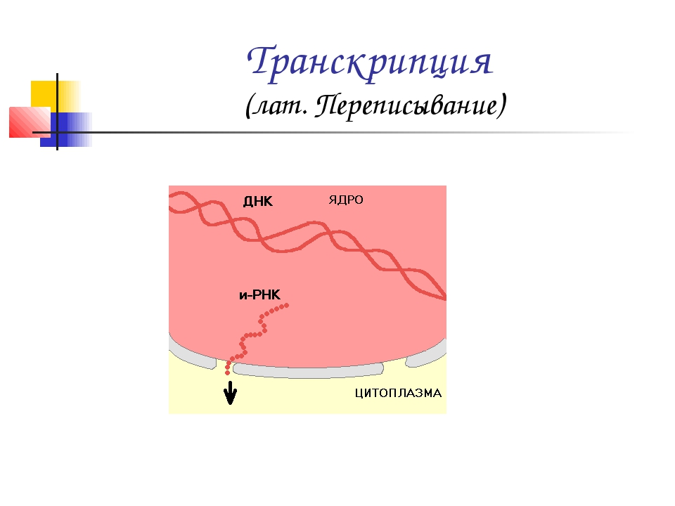 Транскрипция (лат. Переписывание)