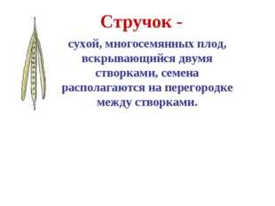 Стручок - сухой, многосемянных плод, вскрывающийся двумя створками, семена ра
