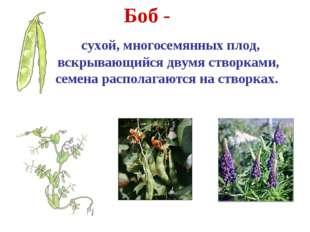 Боб - сухой, многосемянных плод, вскрывающийся двумя створками, семена распол