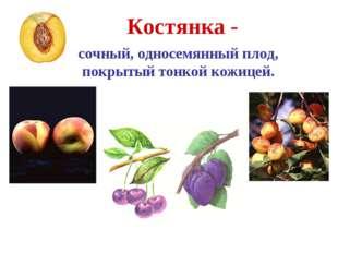 Костянка - сочный, односемянный плод, покрытый тонкой кожицей. Абрикос Персик