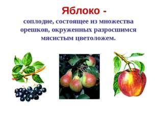 Яблоко - соплодие, состоящее из множества орешков, окруженных разросшимся мяс