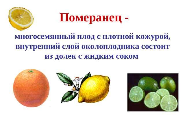 Померанец - многосемянный плод с плотной кожурой, внутренний слой околоплодни...