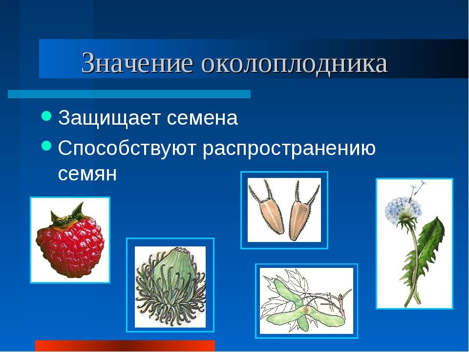 Значение околоплодника Защищает семена Способствуют распространению семян