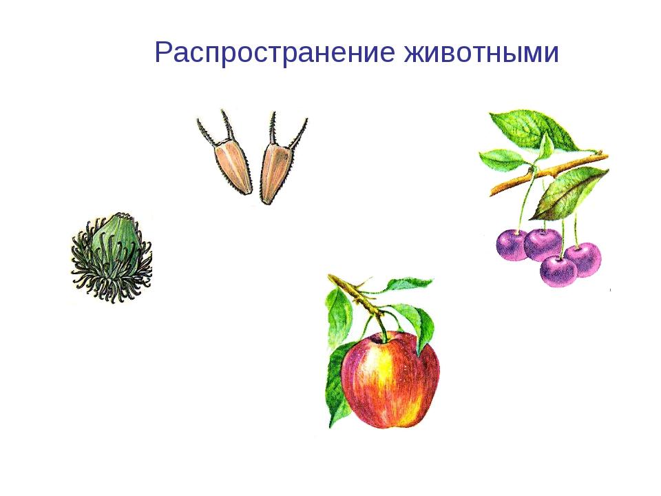 Лопух Череда Распространение животными Вишня Яблоня