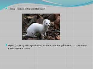 Норка - хищное млекопитающее; норка (от «нора») - временное или постоянное уб