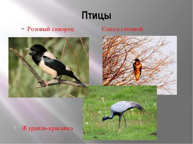 Птицы Розовый скворец Сокол степной Журавль-красавка