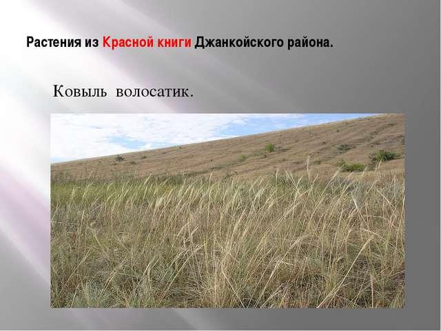 Растения из Красной книги Джанкойского района. Ковыль волосатик.