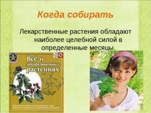Когда собирать Лекарственные растения обладают наиболее целебной силой в опре