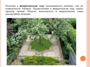 Растения в мавританском саду высаживаются свободно, они не подвергаются стриж