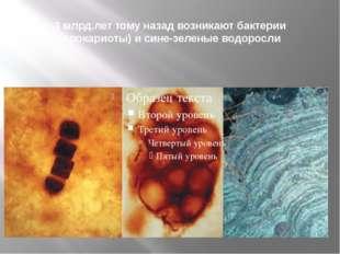 3 млрд.лет тому назад возникают бактерии (прокариоты) и сине-зеленые водоросли