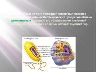 Гигантский шаг на пути эволюции жизни был связан с возникновением основных б