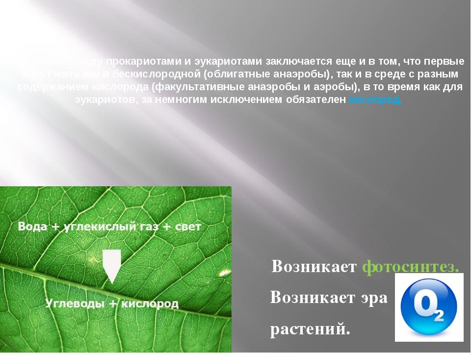 Различие между прокариотами и эукариотами заключается еще и в том, что первы...