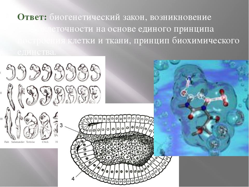 Ответ: биогенетический закон, возникновение многоклеточности на основе единог...
