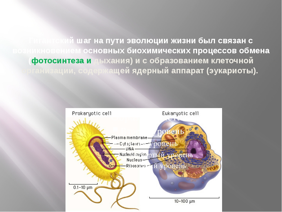Гигантский шаг на пути эволюции жизни был связан с возникновением основных б...