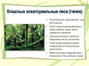 Влажные экваториальные леса (гилея) Растительность разнообразна, леса многояр
